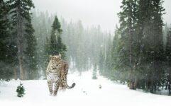 Un training en hiver, la mode à votre secours