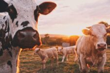 Baisse de la consommation de viande et montée du fléxitarisme