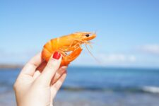 Pour bien vieillir, mangez des fruits de mer !